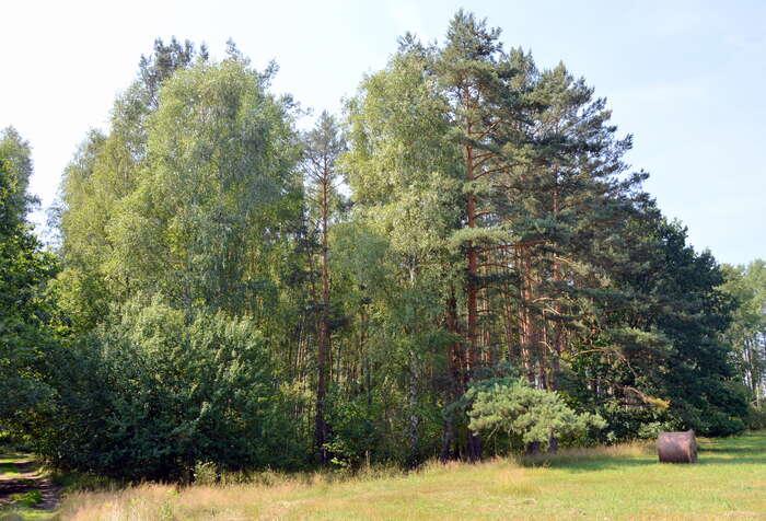 Ohrožený les zaHeřmanickým rybníkem (26. 7. 2014). Foto Miroslav Hudec
