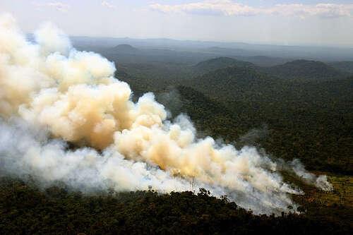 Na nečekanou souvislost šíření pandemií sničením divoké přírody upozorňuje hned několik studií. Foto leoffreitas, flickr.com