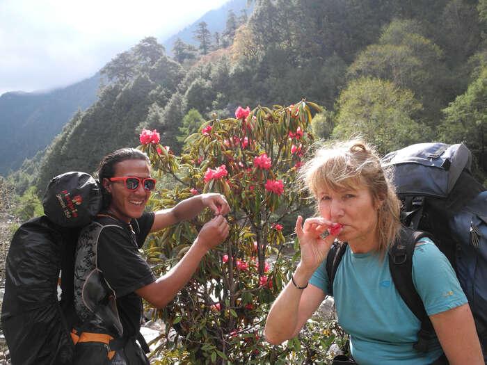 """Náš průvodce Amrit, jehož jméno znamená """"elixír života"""", nás naučil pít nektar zrododendronů ajíst žluté ostružiny plné vitaminu C. Další den jej osud odvolal kvážnějším úkolům a mypokračovali dohor sami. Foto archiv J. Piňose aP. Hrdličkové"""