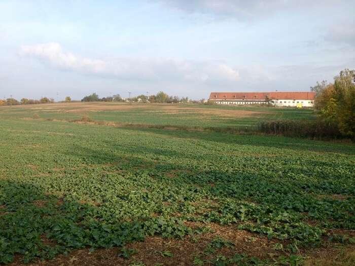 Obrázek hospodaření Agrofertu: rozsáhlé kusy pole uBojanovic vypálené špatně aplikovaným pesticidem. Foto Deník Referendum