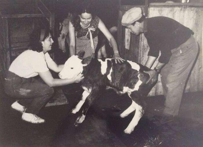 Všechny své krávy jsme znaly jménem. Věděly jsme, kdy měla která telátka. Repro DR