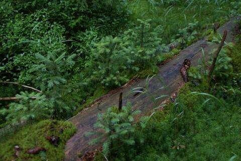 Klesají náklady nazalesňování, les seobnovuje sám. Foto Hnutí DUHA