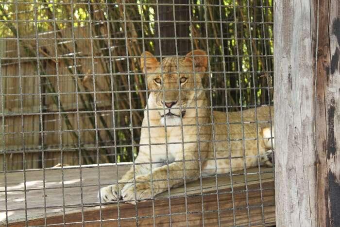 Po volbách lze čekat zoologickou zahradu zevzpomínek nasedmdesátá léta. Foto pxhere.com