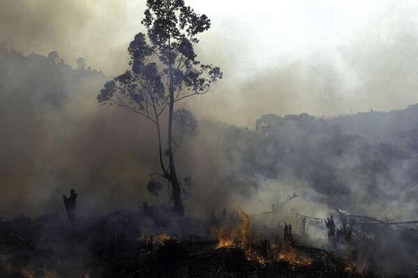 Vzácná místa jako deštné lesy Madagaskaru aBrazílie zanikají pod kopyty rozpínajícího sedobytka. Foto Conservation International