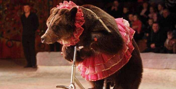 Zneužívání volně žijících zvířat kbizarním cirkusovým číslům jezakázáno vedvanácti evropských zemích. Foto Better World International