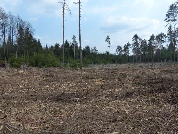 Za kritický stav lesů nese odpovědnost Ministerstvo zemědělství, které nyní navíc dokonce sveřepě brání vjeho zlepšení. Foto Miroslav Kutal, Hnutí Duha