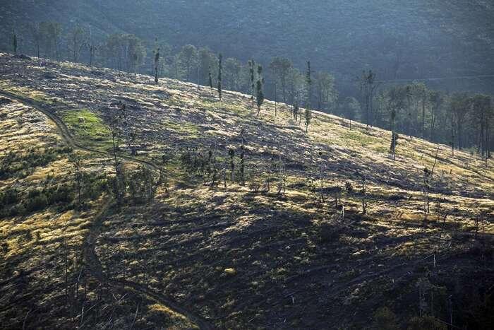 Kolaps lesních ekosystémů způsobilo naše zjednodušené pojetí lesa vrovině: strom, motorová pila, oheň vkrbu, trámy, krov, hříbek, srnka bum, relaxace. Foto Jan Langer