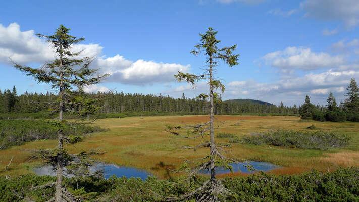 Vzácná krkonošská rašeliniště vysychají. Jako řešení volí správa parku odstraňování odvodňovacích rýh apříkopů. Foto Petr Vilgus