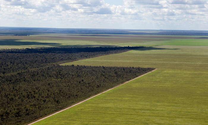 Pastviny jsou jen mezistupněm kintenzivnímu zemědělství. Foto Adriano Gambarini, WWF