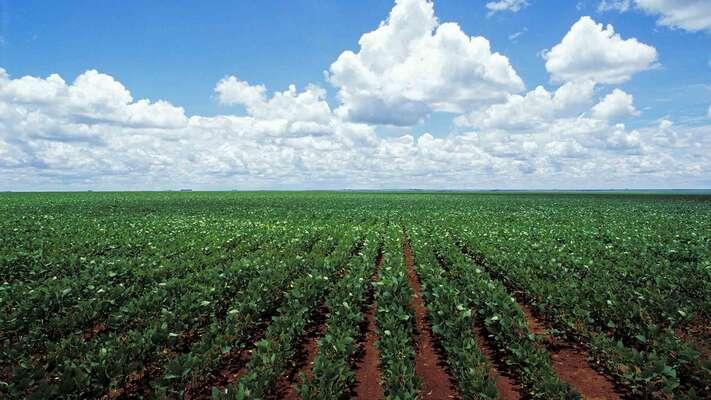 Na rozsáhlých územích bývalé divočiny sepěstuje sója. Repro DR
