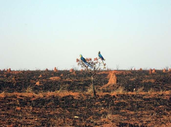 Osud brazilské přírody záleží napřístupu Evropské unie. Foto IcmBio