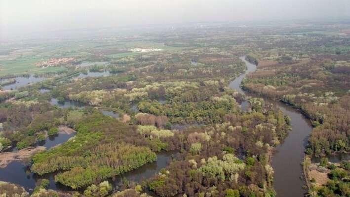 Jeden zezpůsobů, jak vrátit vodu dokrajiny: rakouský WWF obnovuje vrezervaci Auenreservat vMarcheggu narakouském břehu řeky Moravy systém starých ramen amokřadů. Foto WWF