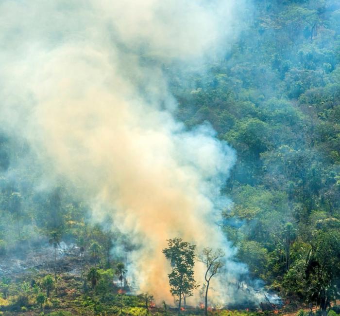 Hořící plíce planety dnes oxid uhličitý nezachytávají, ale masivně vypouštějí doatmosféry. Foto Rainforest Alliance