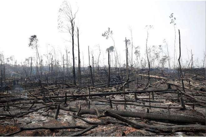 Do EUmají volně plynout potraviny, dotěch jihoamerických zase chemikálie. Toznamená další zničené plochy pralesa, aby sevyprodukovalo víc levného hovězího. Repro DR