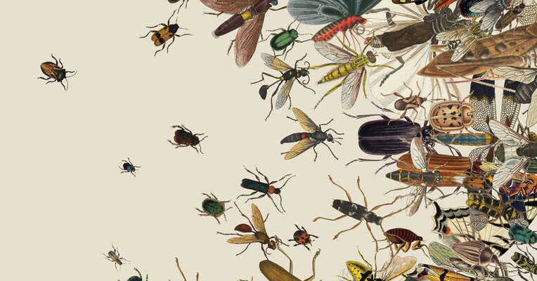 Umírá-li hmyz, umíráme už imy, jen tozatím nejsme schopni chápat. Ilustraceusahitman.com