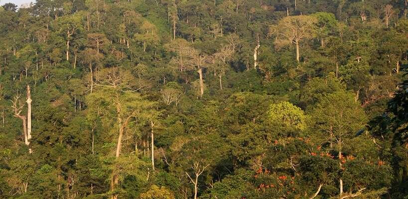 Těžba ohrožuje i unikátní ekosystém pralesu Atewa. Foto GWS