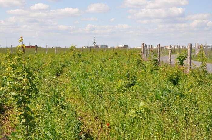 Necelou desetinu nynější milionové plánované výsadby představuje lesopark Arborka usazený naokraji Satalic, vcípu mezi radiálou Pražského okruhu, železnicí aprůmyslovými podniky. Foto Jakub Krahulec, DR