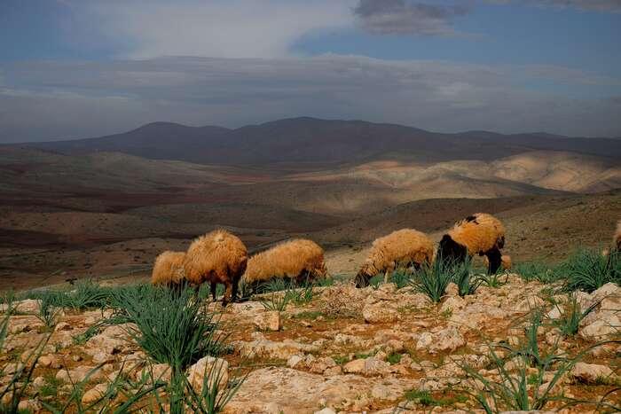Výhled naúdolí Jordánu, oblasti, kterou Izrael plánuje anektovat. Foto Lucie Šarkadyová