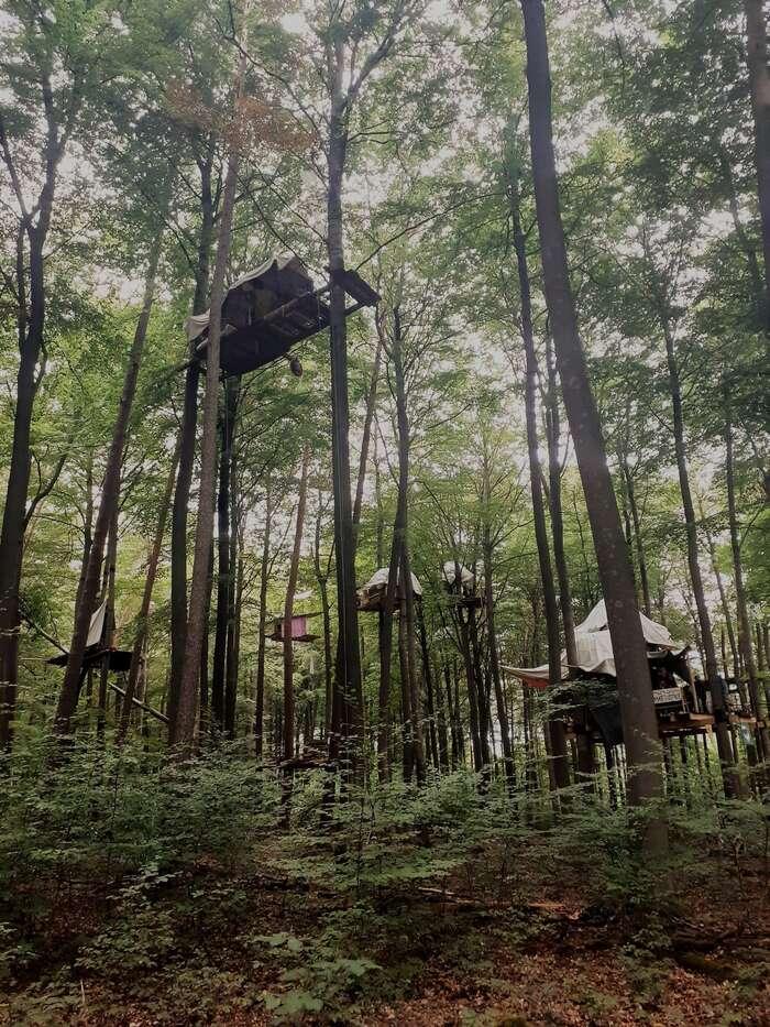 V lese jeasi sto stromových domečků. Foto Twitter Dannenröder Waldbesetzung