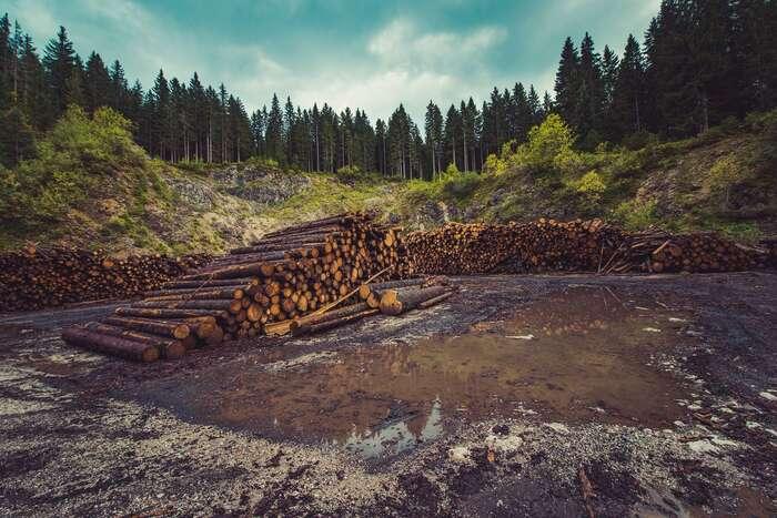 Lesy jsou podle vědců důležité pro dosažení uhlíkové neutrality. Jejich kácení aspalování kvůli výrobě energie však spíše prohlubuje krizi klimatu abiodiverzity. Foto Pixabay