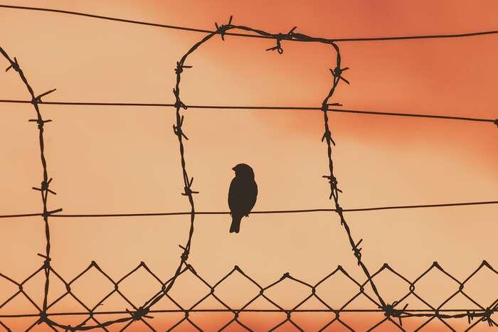 """Jsem přesvědčen otom, že senesmíme spokojit sdílčími opravami stávajícího systému. Nemůžeme seani spokojit sesocialismem, který jegarantován státem. Naše vize musí být mnohem prozíravější, odvážnější, mnohem více vizionářské. Musíme siklást odvážné otázky ahledat odvážné odpovědi! Naše základní ideály rovnosti, svobody asounáležitosti jednoznačně přesahují apopírají současné """"fungování"""" kapitalistické ekonomiky akonzumního způsobu života společnosti. Foto Dimitris Vetsikas, pixabay"""