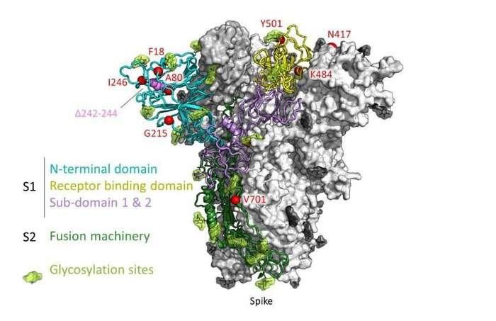 Zmutovaný spike protein viru. Místa změn značí červené tečky. Model zpreprint studie Emergence and rapid spread ofanew severe acute respiratory syndrome-related coronavirus 2(SARS-CoV-2) lineage with multiple spike mutations inSouth Africa (medRxiv, 2021)
