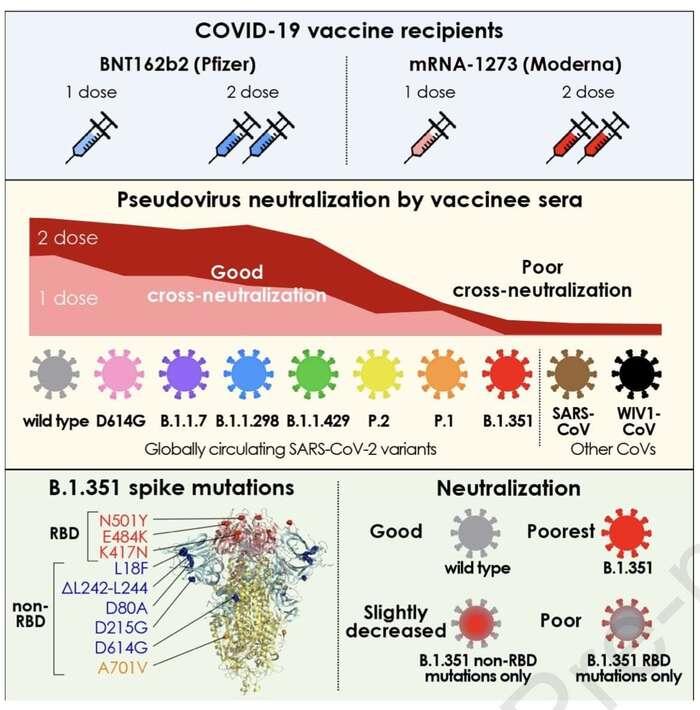 """Přehledné zobrazení schopnosti mRNA vakcín invitro neutralizovat virové varianty. """"Jihoafrická"""" vychází jako zdaleka nejsilnější, problém přináší ivarianty """"brazilské"""". Dobrou zprávou je, že naostatní dvě varianty očkovací dávky bez problému stačí. Graf Garcia-Beltran etal., Multiple SARS-CoV-2 variants escape neutralization byvaccine-induced humoral immunity, Cell (2021); Pozn.: B.1.1.429 jeB.1.429, zřejmě jde opřeklep."""