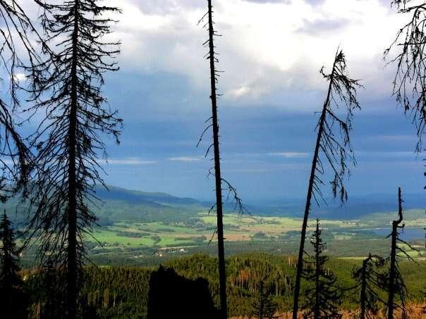 Odborníci dlouhodobě upozorňují, že cestu zkrize, která lesy postihla, představuje důsledná proměna lesního hospodaření. Foto WmC