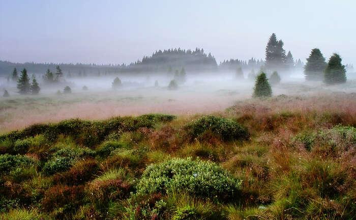 Kauza snelegálním kácením všumavském národním parku, kde hrál roli boj olukrativní pozemky, napovídá, že itradiční strany mívají sdemokracií problém. Foto archiv DR